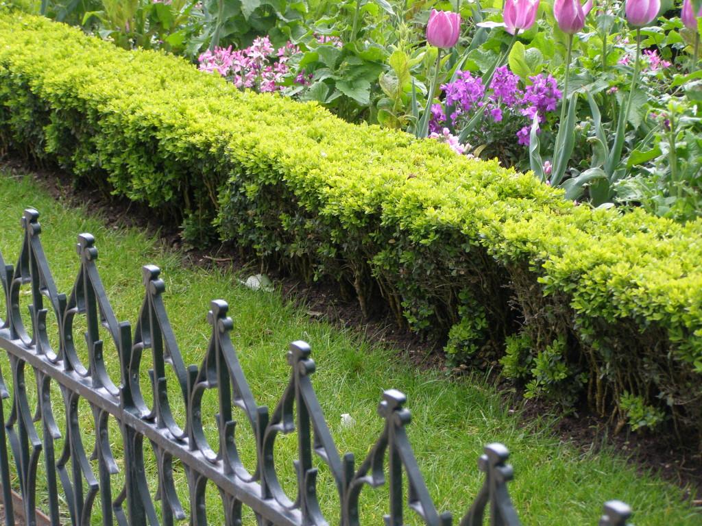 Paris gardens: Notre Dame